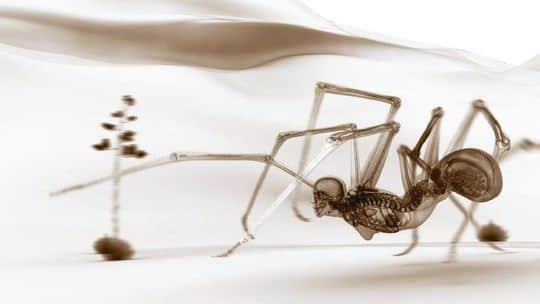 Hominid: animação mostra mostra como seriam os animais se tivessem esqueletos humanos